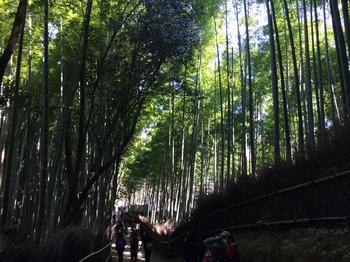 arashiyama_03.jpg